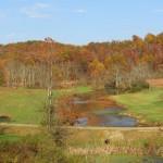 Fall Colors in Belpre, Ohio