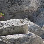 Chipmunk in the South Sierra Wilderness