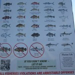 Commonly Caught Fishes in the Florida Keys