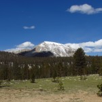 Crabtree Meadow in the Inyo National Forest