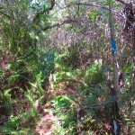 Dense Forest in Big Cypress National Preserve