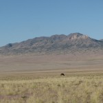 Horse and Mountain in the Desert