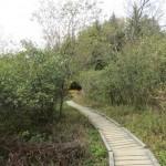 Bear Rocks Trail in the Dolly Sods Wilderness