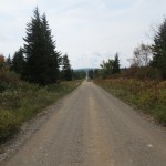 Road at the Top of Bear Rocks Preserve in the Dolly Sods Wilderness