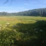 Dry Pond Outside Dalton, Massachusetts