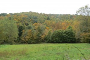Fall Colors in the Monongahela National Forest