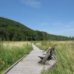 Great Swamp Boardwalk in Pawling, New York