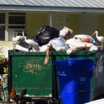 Ibis in the Trash in Key West