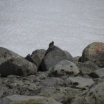 Ground Squirrel in Kings Canyon National Park