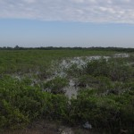 Marshy Field in the Florida Keys