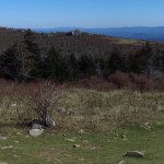Wild Ponies at Massie Gap in Grayson Highlands, Virginia Panorama