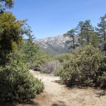 Trail on Mount San Jacinto