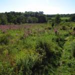 Meadow in New Jersey