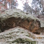 Porous Sandstone at Garden of the Gods in the Shawnee National Forest