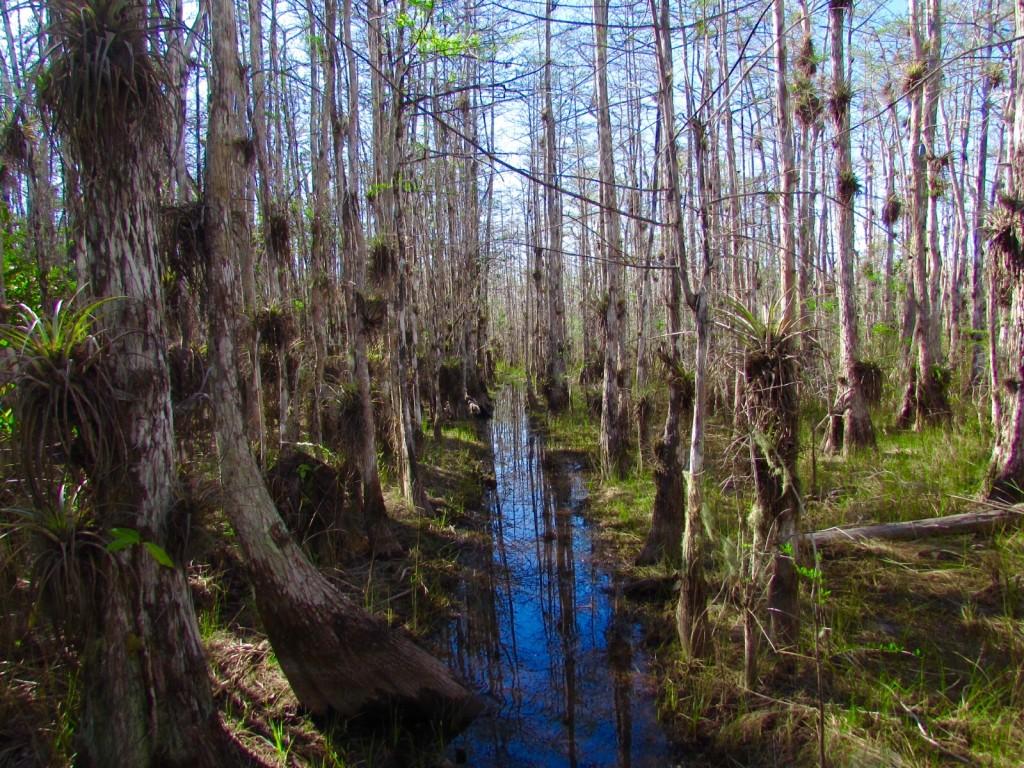 Swamp-Tromping-Big-Cyprus-National-Preserve-2