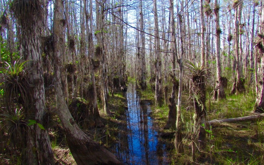 Swamp Tromping in Big Cypress National Preserve