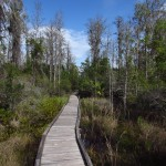 Boardwalk in the Three Lakes Wilderness Management Area