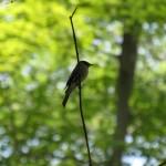 Unknown Bird in New York