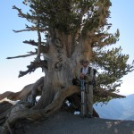 Wally Waldron Tree on Top of Mount Baden Powell