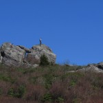 Man on Rock in Grayson Highlands, Virginia