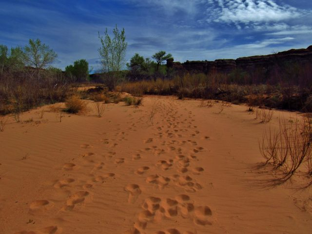 Footprints in the Sand in Horse Canyon