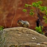 Hungry Squirrel in Lost Canyon